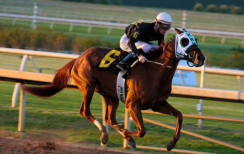 which are the best online horse betting sites