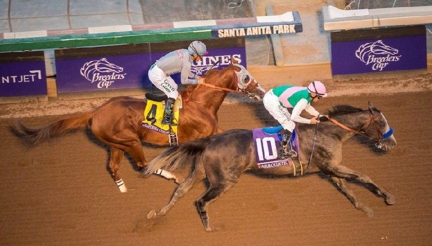Try to wager on the the breeders cup race!