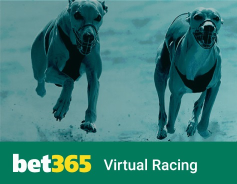 Bet365 is the online bookmaker for betting on greyhound races!