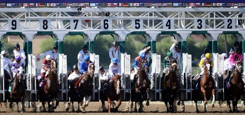 What kind of races does the breeders cup offer?