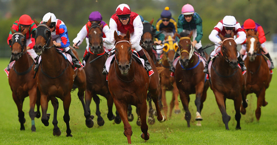 find about betting on horses at parimutuel gambling