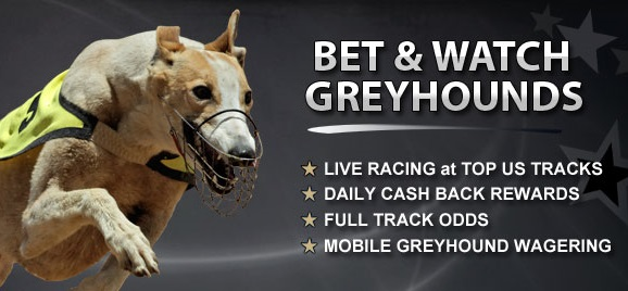 Which bookmakers that promote greyhounds racing offer free bets?