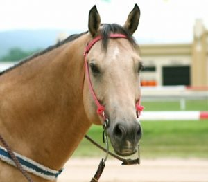 which are the common types of horse racing