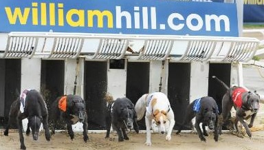Is the site of William Hill perfect for greyhounds betting?